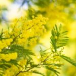 フランスにも花粉症はある?関係するフランス語